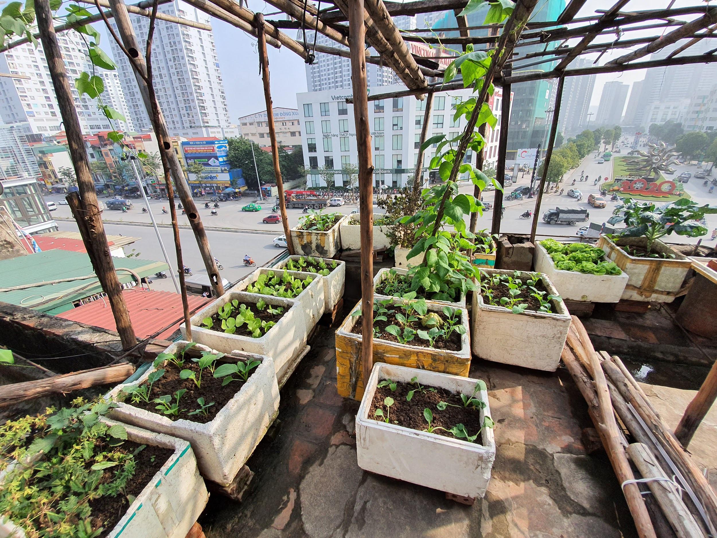 """Độc đáo """"nông trại"""" trồng rau, nuôi gà trên sân thượng, giữa lưng trời ở Hà Nội - 4"""