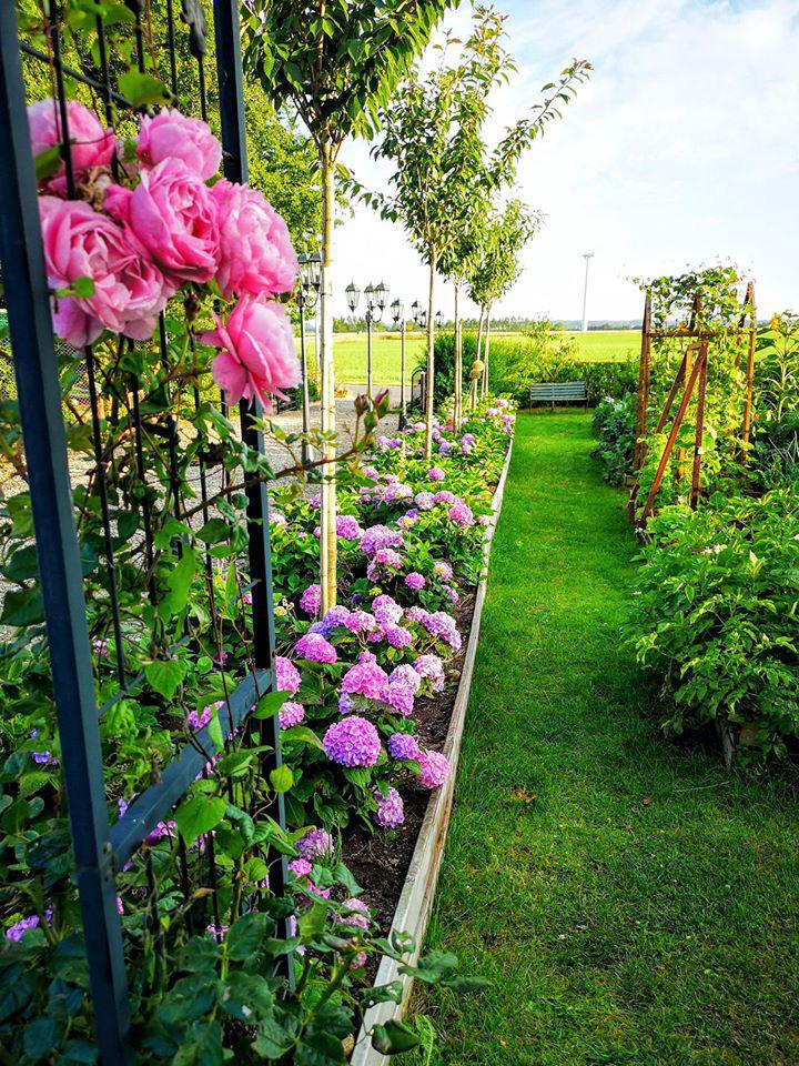 Khu vườn đẹp như cổ tích nhờ sở thích trồng cây và hoa của chàng trai trẻ - Ảnh 19.