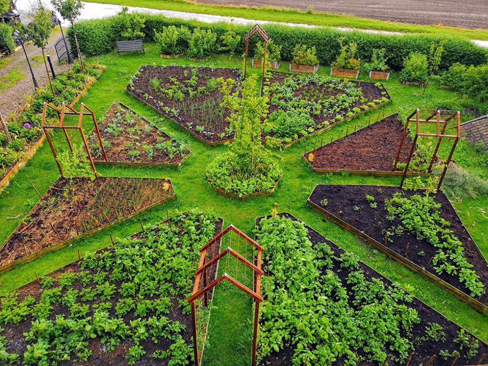 Khu vườn đẹp như cổ tích nhờ sở thích trồng cây và hoa của chàng trai trẻ - Ảnh 1.